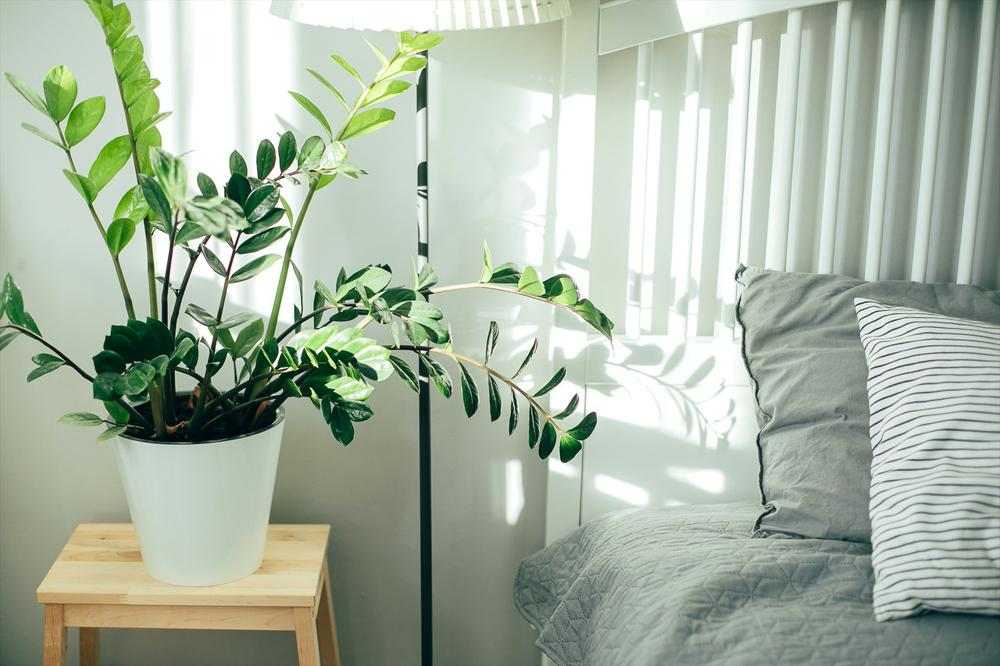 plant and bed